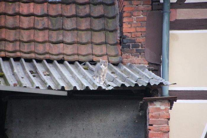 Auf dem Dach.