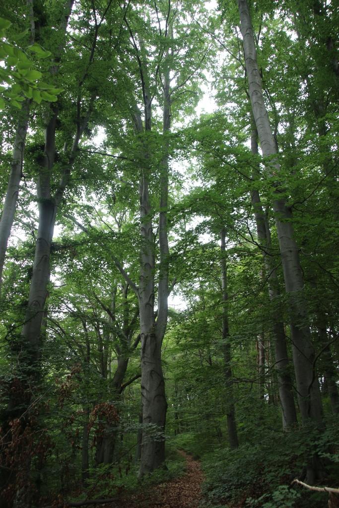 Ein Stückchen Wald gab es auch.